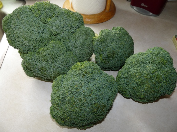 2# Broccoli