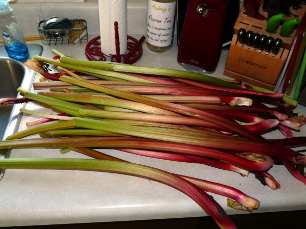 A portion of my mountain of rhubarb