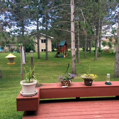 Wider view of various bird feeders